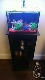 Betta duo fish tank Allows two Siamese fighting fish