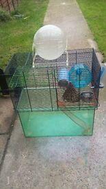Gerbil/ hamster cage