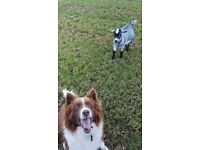 Furry Friends - Pet Sitting in Dromore and surrounding area