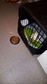 Black dog cage