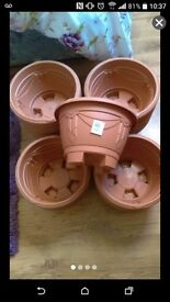 5 x terracotta or black plant pots