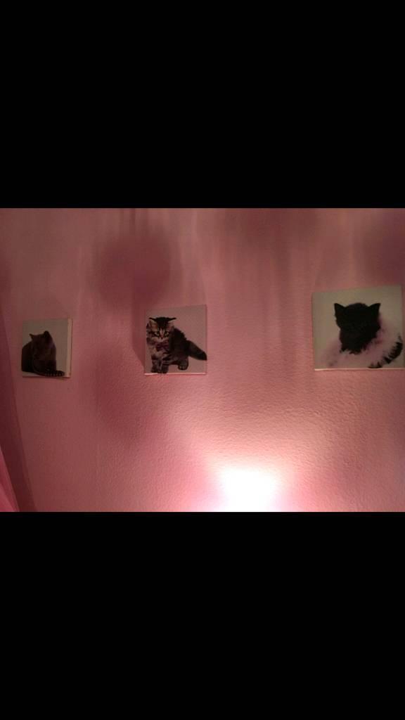 Kitten canvases