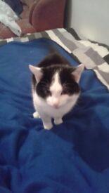 Male Tom Cat