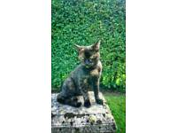 CAT MISSING. She went from East Sutton area