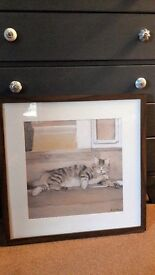 Framed picture of Tabby cat dozing