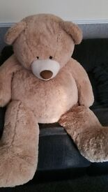 Large teddy needs loving home