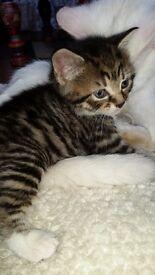 Beautiful baby kittens