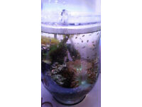 Complete Saltwater Reef Aquarium in a Vase (Ready to go - No other kit needed!)