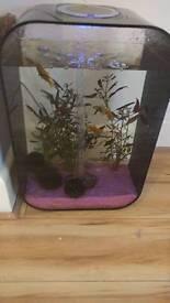 BioOrb fish tank with fish and shrimps