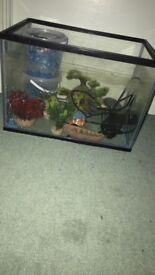 24L fish tank