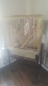 Cockateil plus large cage for sale