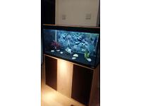 FLUVAL ROMA 200 LITER FISH TANK AND STAND FOR SALE IN MINT CONDITIONS,WITH EXTERNAL FILTER