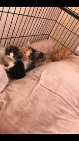 Beautiful kittens for sale ready to go now