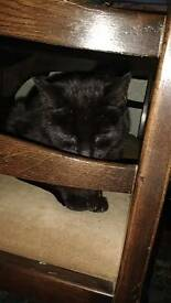 All black cat
