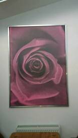 Very large rose print in silver frame