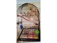 cockateils and large cage for sale