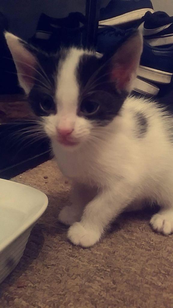 Kitten for Rehoming
