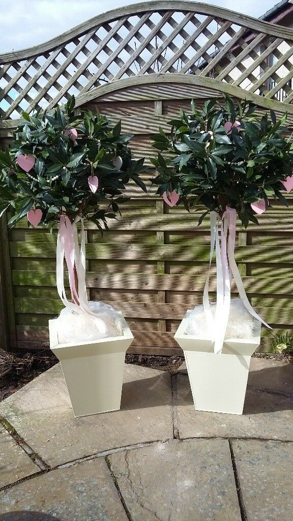 Wedding Bay Trees And Containers