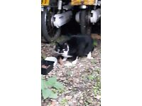 Found in Howe black and white cat