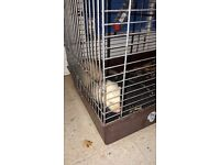 Sandy ferret free to good home
