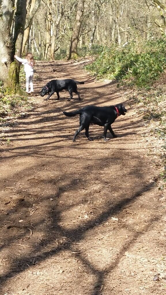 Professional Surrey Dog Walker and Pet Sitter, Animal Assistance.