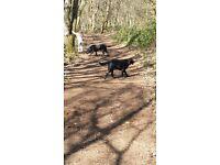 Professional Surrey Dog Walker and Pet Sitter, Animal Assistance.