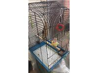 Canery birds with cage