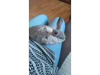 Two bonded rabbits