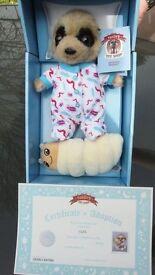 Baby Oleg (with Bug) Meerkat