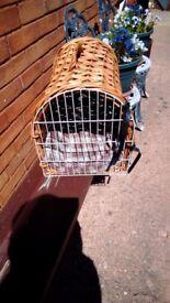 Cat. Basket