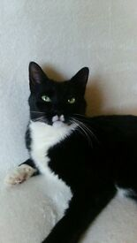 Lovely Female Cat Looking For New Home