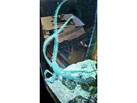 marine brittle starfish for sale