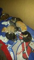 6 female kittens that need a home asap!