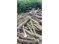 Free wood logs from tree cutting