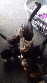 kittens needing new loving homes