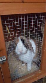 Rabbits an hutch