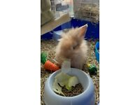 9 week old rabbit, cage, hey, food, litter tray n pellits