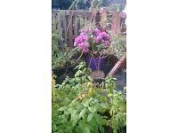 Weeping Willows, Hydrangeas, Mint, Gooseberries, Raspberries.