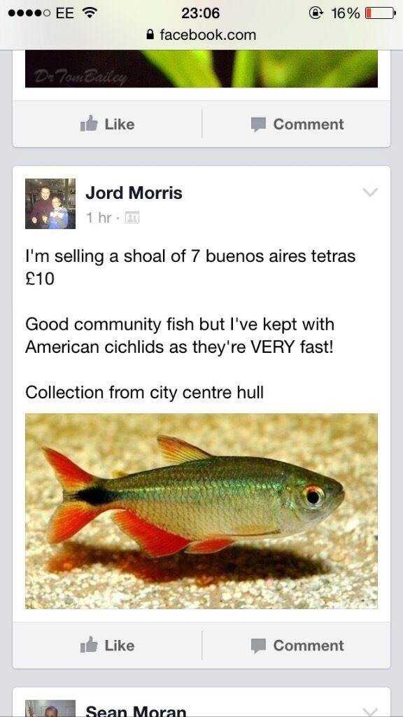 Convict Fish For Sale Fish For Sale Convicts