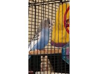 Budgie and black cage with stand