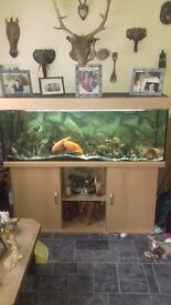 5ft by 2ft tropical fish tank