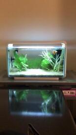 Stylish and Modern Aquarium