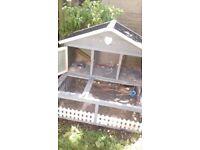 small animal blossom guinea pig hutch