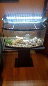 Aquael bow front fishtank