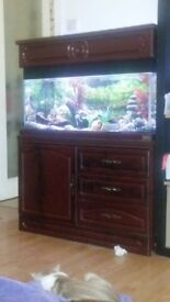 3ft fish tank with all accessories