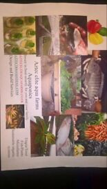 aquaponic invest in food security for you and yor family