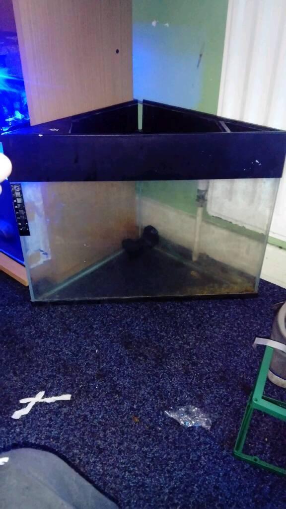 Small corner fish tank