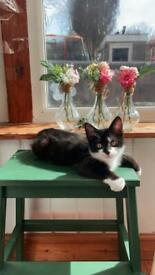 lovely male kitten edmonton