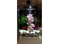 15lt fish tank and contents