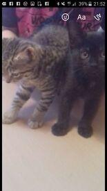 Mixed litter of kittens